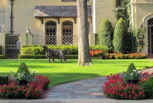Lawn Treatments Annapolis MD
