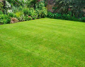 Lawn Treatments Bowie MD