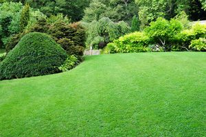 lawn care services on the green inc odenton maryland md